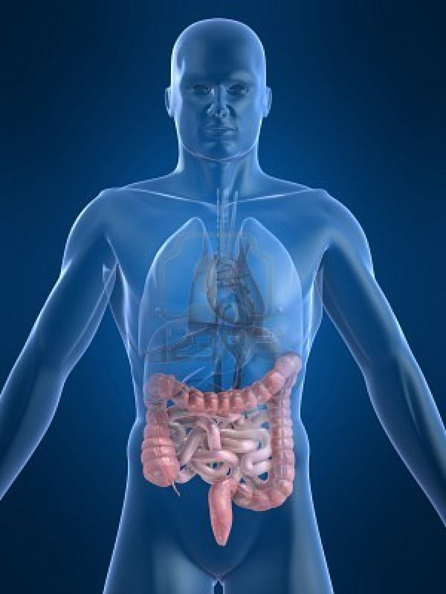 Yakult México » ¿Por qué cuidar los intestinos?