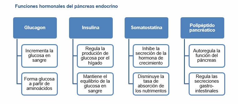 Yakult México » ¿Qué funciones tiene el páncreas en nuestro organismo?