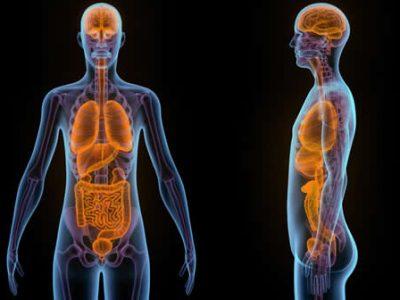 ¿Influye la microbiota intestinal en el estado emocional?