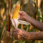 """Día Mundial de la Alimentación """"Dietas Saludables para un Mundo Sin Hambre"""""""