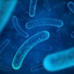 ¿Cómo elegir un buen probiótico?