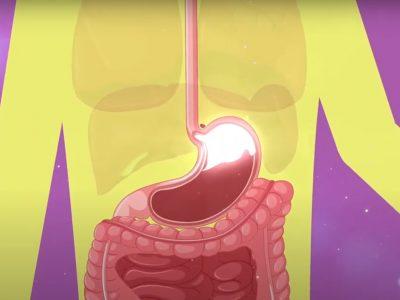 Nuevo video ¡Los Lactobacillus casei Shirota llegan vivos al intestino! en YouTube