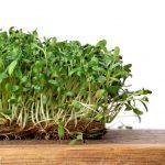 Alfalfa: usos en la cocina
